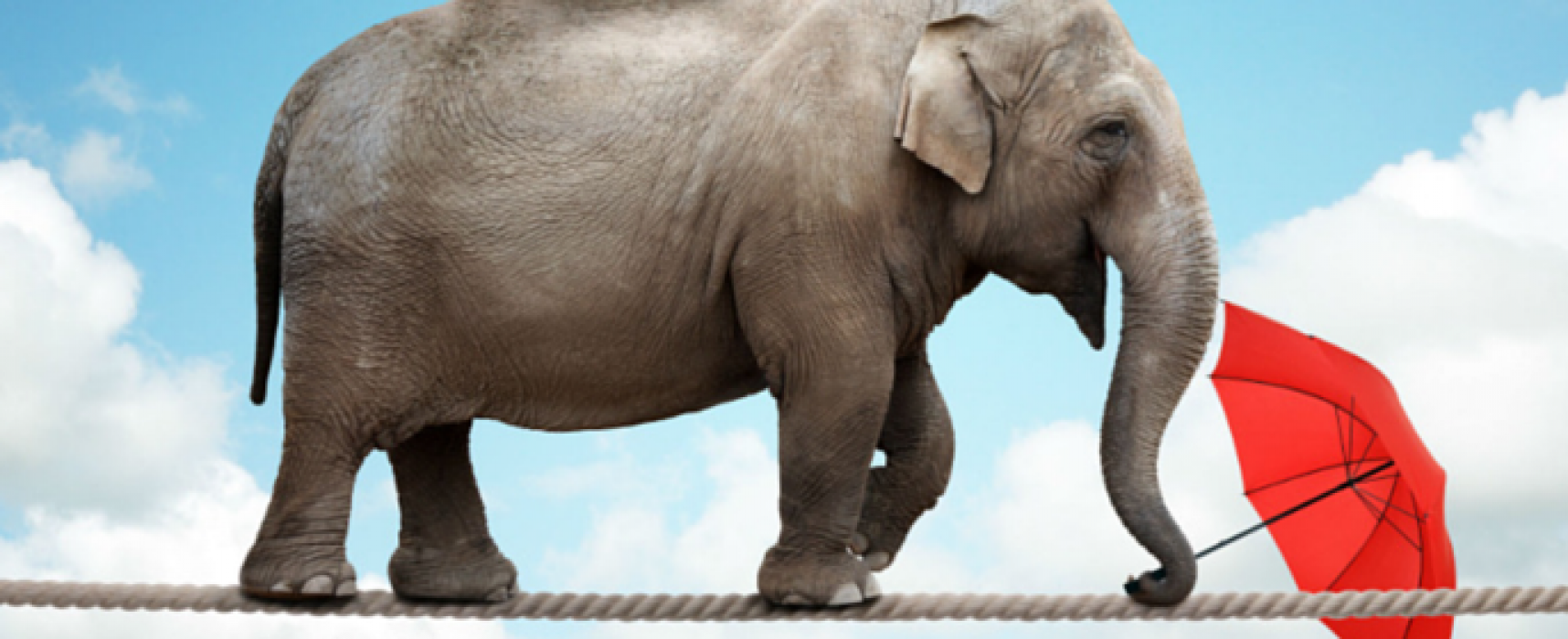 Why You and Your Elephant Haven't Lost Weight Yet