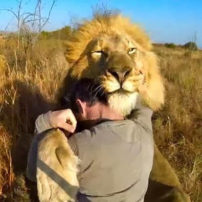 HUGGING LIONS
