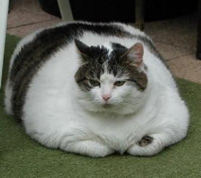 fat animals